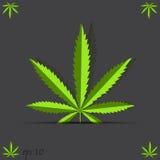 Κάνναβη φύλλων μαριχουάνα Στοκ εικόνες με δικαίωμα ελεύθερης χρήσης