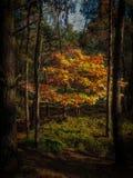 Κάνοντας ηλιοθεραπεία δέντρο Στοκ Εικόνες
