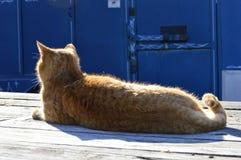 Κάνοντας ηλιοθεραπεία γατάκι Στοκ φωτογραφία με δικαίωμα ελεύθερης χρήσης