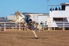 Κάουμποϋ που οδηγά ένα άλογο Bucking Bronc σε ένα ροντέο χώρας Στοκ Εικόνα