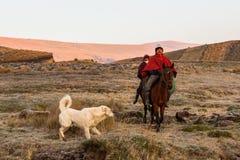 Κάουμποϋ που οδηγούν τα άλογα, Στοκ Φωτογραφία