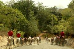 Κάουμποϋ στη Κόστα Ρίκα Στοκ εικόνες με δικαίωμα ελεύθερης χρήσης