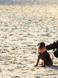 Κάποιος δίνει το petting σκυλί στην παραλία Στοκ φωτογραφίες με δικαίωμα ελεύθερης χρήσης