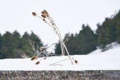 Κάποιος ξηρός κάρδος Στοκ Φωτογραφίες