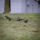 Κάποιο μικρό πουλί στα graas Στοκ εικόνες με δικαίωμα ελεύθερης χρήσης