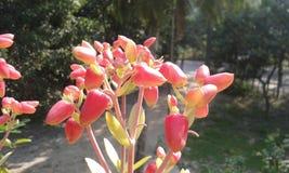 Κάποιο μόριο στιγμής τα λουλούδια μου Στοκ Φωτογραφίες