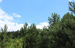 Κάποιο pine-wood Στοκ φωτογραφίες με δικαίωμα ελεύθερης χρήσης
