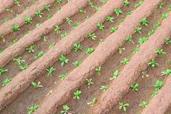 Κάποιο soild που διαμορφώνει τις διαγώνιες σειρές σε μια γεωργική γη Στοκ φωτογραφία με δικαίωμα ελεύθερης χρήσης