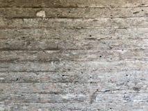 κάπρων Στοκ εικόνες με δικαίωμα ελεύθερης χρήσης