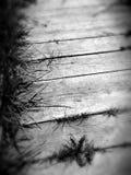 κάπρων Στοκ εικόνα με δικαίωμα ελεύθερης χρήσης