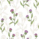 Κάρδων λουλουδιών γραφικό διάνυσμα απεικόνισης σκίτσων υποβάθρου σχεδίων χρώματος άνευ ραφής Στοκ εικόνα με δικαίωμα ελεύθερης χρήσης
