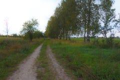 Κάρρο-δρόμος, κοντά στις σημύδες στοκ φωτογραφία με δικαίωμα ελεύθερης χρήσης