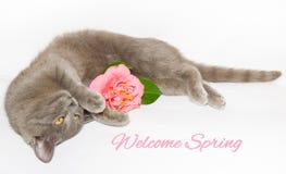 Κάρτα άνοιξη με τη γάτα και το λουλούδι Στοκ φωτογραφία με δικαίωμα ελεύθερης χρήσης