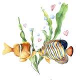 Κάρτα αγάπης Watercolor με τα τροπικά ψάρια Το χέρι χρωμάτισε τα φύλλα και κλάδο laminaria, δύο ψάρια, τις αεροφυσαλίδες και τις  απεικόνιση αποθεμάτων