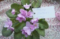 Κάρτα ημέρας μητέρων ` s με την εγγραφή και τα λουλούδια της βιολέτας, ένα όμορφο σκηνικό για τους χαιρετισμούς στοκ εικόνα
