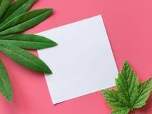Κάρτα κειμένων με τα τροπικά φύλλα Στοκ Εικόνες