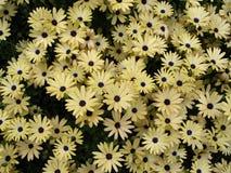 κάρτα λουλουδιών Στοκ Φωτογραφίες