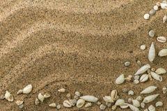 Κάρτα με οριοθετημένα τα άμμος κοχύλια θάλασσας στοκ φωτογραφία