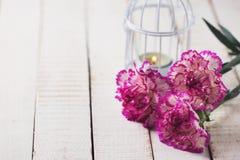 Κάρτα με τα κομψά λουλούδια γαρίφαλων Στοκ φωτογραφία με δικαίωμα ελεύθερης χρήσης