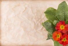 Κάρτα με τα λουλούδια Πρόσκληση με το κόκκινο παλαιό έγγραφο λουλουδιών Στοκ Εικόνες