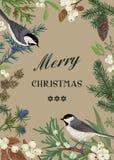 Κάρτα με τα πουλιά και evergreens Στοκ Φωτογραφίες