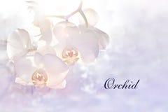 Κάρτα με την όμορφη άσπρος-ρόδινη ορχιδέα στοκ φωτογραφία