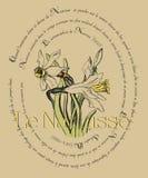 Κάρτα με τους ναρκίσσους και ποιήματα από το Salvador Dali Στοκ Εικόνες