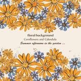 Κάρτα με το calendula και τα cornflowers ελεύθερη απεικόνιση δικαιώματος