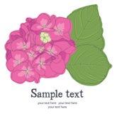 Κάρτα λουλουδιών Στοκ Φωτογραφία