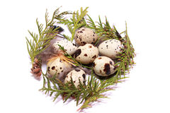 κάρτα Πάσχα φωλιά αυγών Πάσχας Στοκ φωτογραφία με δικαίωμα ελεύθερης χρήσης
