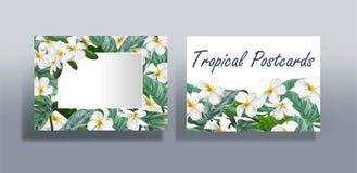 Κάρτα πρόσκλησης Plumeria, διανυσματική απεικόνιση Στοκ φωτογραφία με δικαίωμα ελεύθερης χρήσης