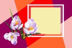Κάρτα σχεδιαστών Όμορφα άσπρα ιώδη λουλούδια κρόκων o Floral φωτεινό σχέδιο υποβάθρου στοκ εικόνες