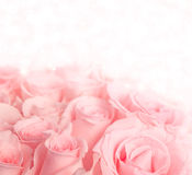 Κάρτα τριαντάφυλλων Στοκ φωτογραφίες με δικαίωμα ελεύθερης χρήσης