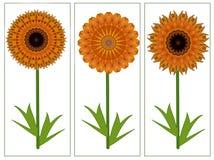 Κάρτα χαιρετισμών με τρία κίτρινα πορτοκαλιά θερινά λουλούδια Στοκ εικόνα με δικαίωμα ελεύθερης χρήσης
