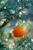 Κάρτα Χριστουγέννων με πορτοκαλί tangerine σε έναν κλάδο χριστουγεννιάτικων δέντρων στοκ φωτογραφίες με δικαίωμα ελεύθερης χρήσης