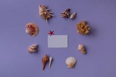 Κάρτα δώρων στο κέντρο και τα θαλασσινά κοχύλια Στοκ εικόνες με δικαίωμα ελεύθερης χρήσης