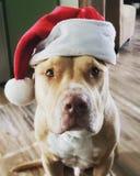 Κάρτα Hercules Χαρούμενα Χριστούγεννας στοκ εικόνα
