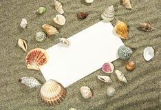 Κάρτα Shell Στοκ Εικόνα
