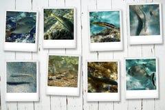 Κάρτες από τη θάλασσα Στοκ εικόνες με δικαίωμα ελεύθερης χρήσης