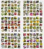 κάρτες εντόμων λουλουδ στοκ εικόνες με δικαίωμα ελεύθερης χρήσης