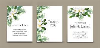 Κάρτες με τα φύλλα plumeria και φοινικών στην κάρτα Στοκ Φωτογραφίες