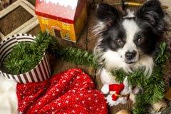 Κάρτες Χριστουγέννων σκυλιών Στοκ φωτογραφία με δικαίωμα ελεύθερης χρήσης