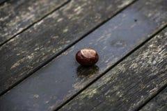 Κάστανα αλόγων και φύλλα φθινοπώρου, Οξφόρδη UK Στοκ φωτογραφίες με δικαίωμα ελεύθερης χρήσης