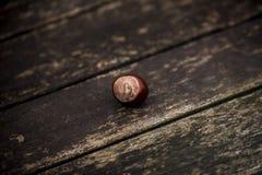 Κάστανα αλόγων και φύλλα φθινοπώρου, Οξφόρδη UK Στοκ εικόνες με δικαίωμα ελεύθερης χρήσης
