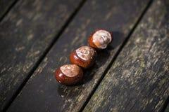 Κάστανα αλόγων και φύλλα φθινοπώρου, Οξφόρδη UK Στοκ Εικόνες