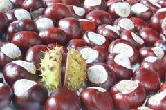 Κάστανα αλόγων Στοκ εικόνες με δικαίωμα ελεύθερης χρήσης