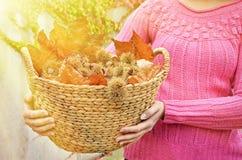 Κάστανα και φύλλα φθινοπώρου Στοκ εικόνες με δικαίωμα ελεύθερης χρήσης