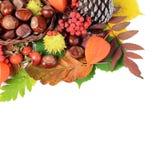 Κάστανα στα φύλλα φθινοπώρου Στοκ εικόνες με δικαίωμα ελεύθερης χρήσης