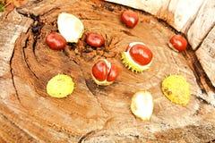 Κάστανα Στοκ φωτογραφία με δικαίωμα ελεύθερης χρήσης