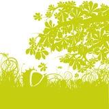 Κάστανο κάτω από ένα δέντρο κάστανων Στοκ Φωτογραφίες